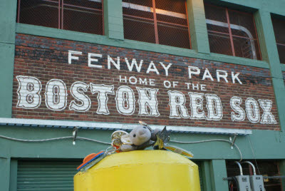 Anteater at Fenway Park
