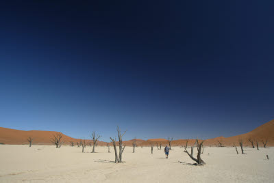 Bill wanders Deadvlei