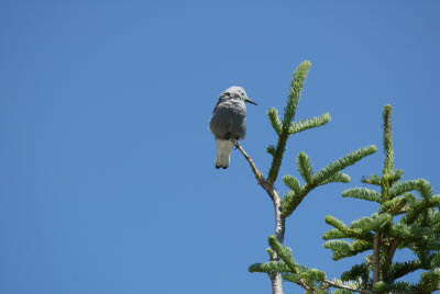Bird at Crater Lake