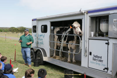 Dairy Cow Milking Demonstration
