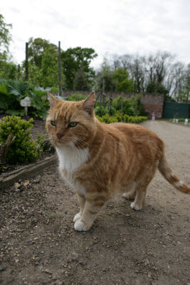 Cat at Normanby Hall Gardens