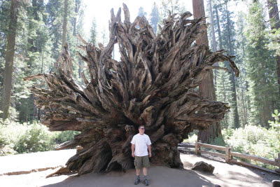 Kevin by an up-ended Sequoia