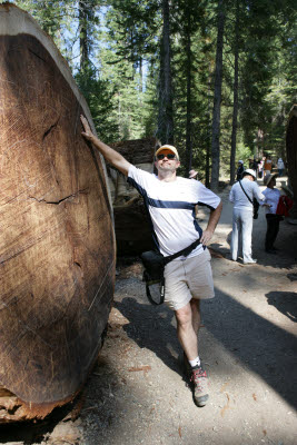 Joe poses by a giant sequoia