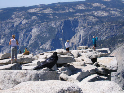 Half Dome Hike, Yosemite, NP