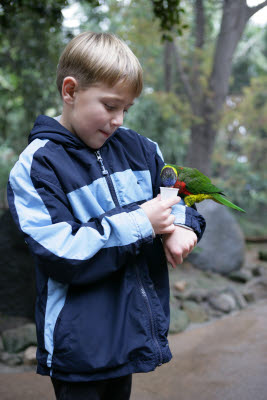 Mikey feeding Lorikeet at Wild Animal Park