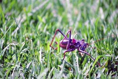 Bug on the lawn at Okapuka Ranch