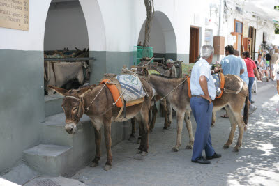 Rent-a-Donkey in Lindos