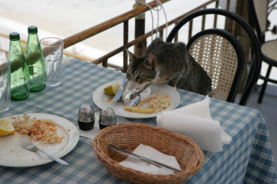 Cat cleaning up in Lindos restuarant