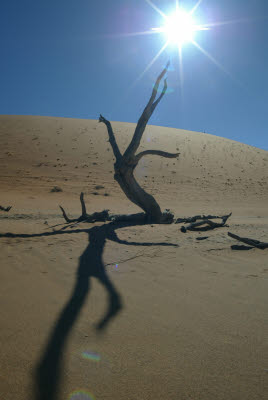 Dune, Sun, and a Tree near Deadvlei