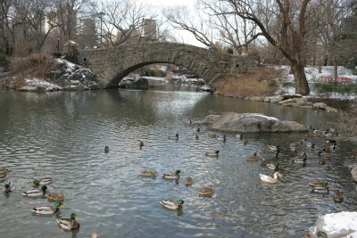 Pond in Central Park