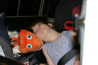 Katie and Nemo take a nap on the ride home